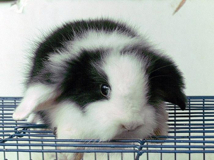 cara ternak kelinci bagi pemula