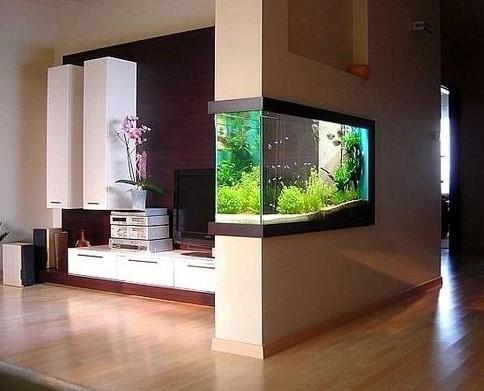Cara Membuat Aquarium Dinding