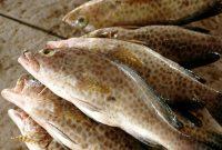 Berikut 5 Jenis Ikan Air Payau Yang Bisa Dibudidayakan