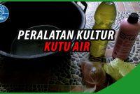 Kultur Kutu Air