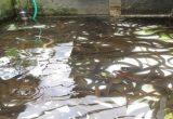 Air Kolam Dan Drum Belut