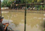 Cara Ternak Ikan Mas Menyiapkan Lokasi Yang Tepat Untuk Berternak