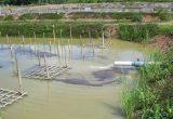 cara ternak udang Menyiapkan Kolam Yang Tepat Untuk Ternak Udang